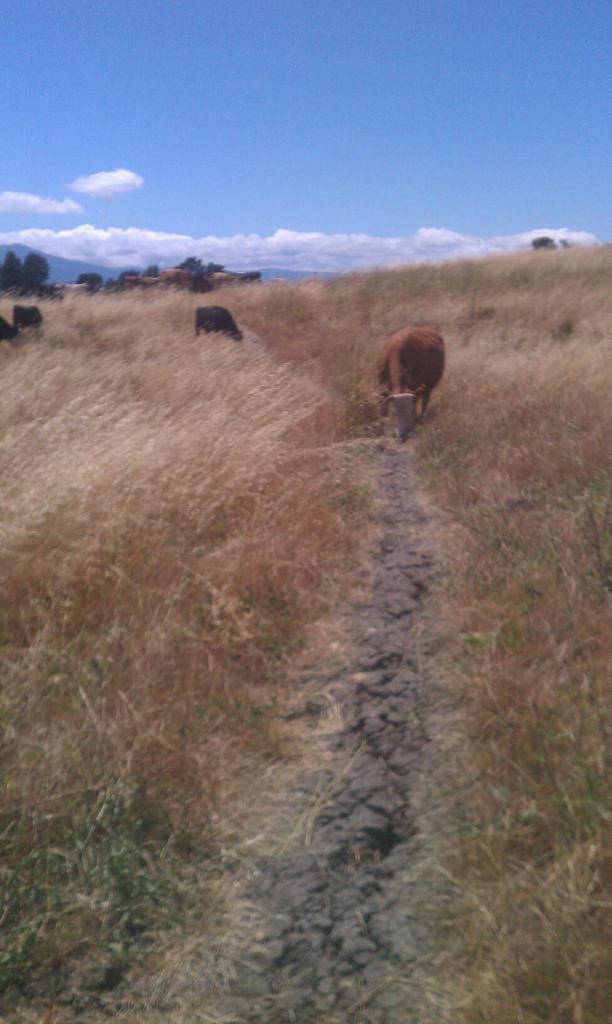 Wildlife you have seen on trail...post your pics...-458569_3120649269614_1976833077_o.jpg