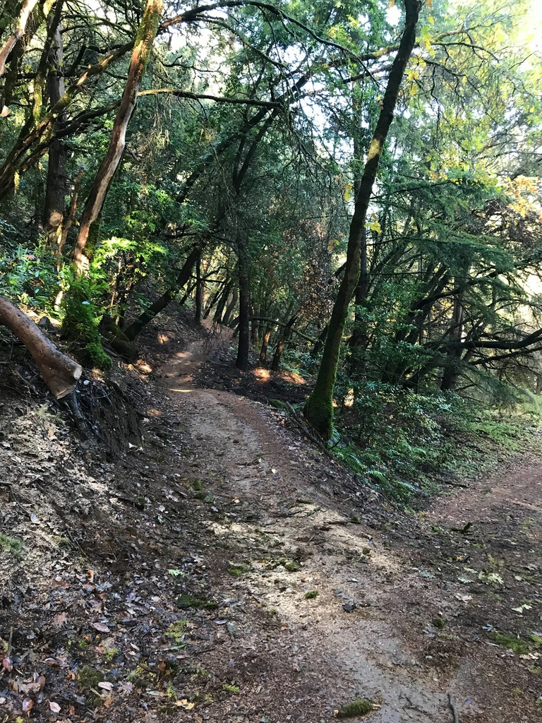 Dec 7-9, 2018 Weekend Ride and Trail Conditions Report-47295531_10217728737038709_7742754955743723520_o.jpg