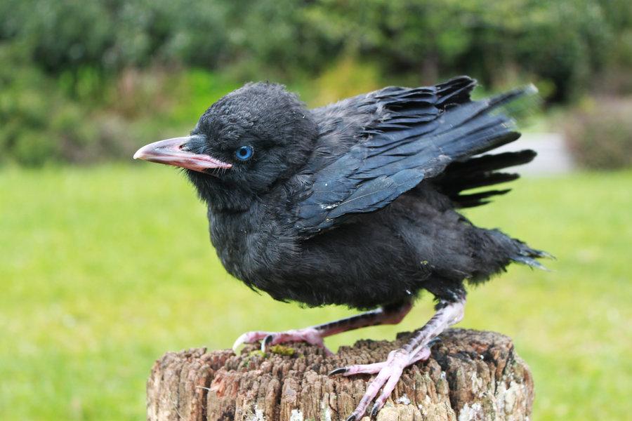 The Bird Thread...-498b8708-3b9f-41ec-8d14-79f4ef5e371a.jpeg