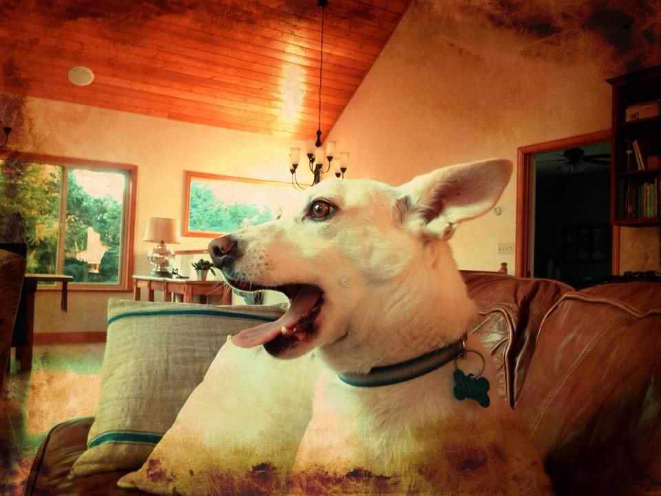 I want a dog-545248_10201336109541206_665974557_n.jpg