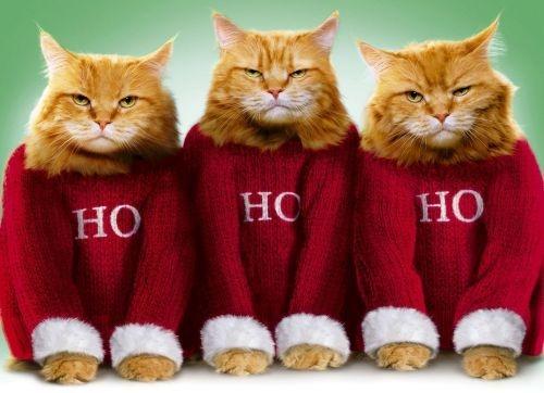 Name:  54596-Ho-Ho-Ho-Grumpy-Cats.jpg Views: 258 Size:  85.1 KB