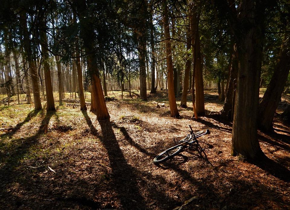Local Trail Rides-59484756_2370236003220837_7380156151414915072_n.jpg