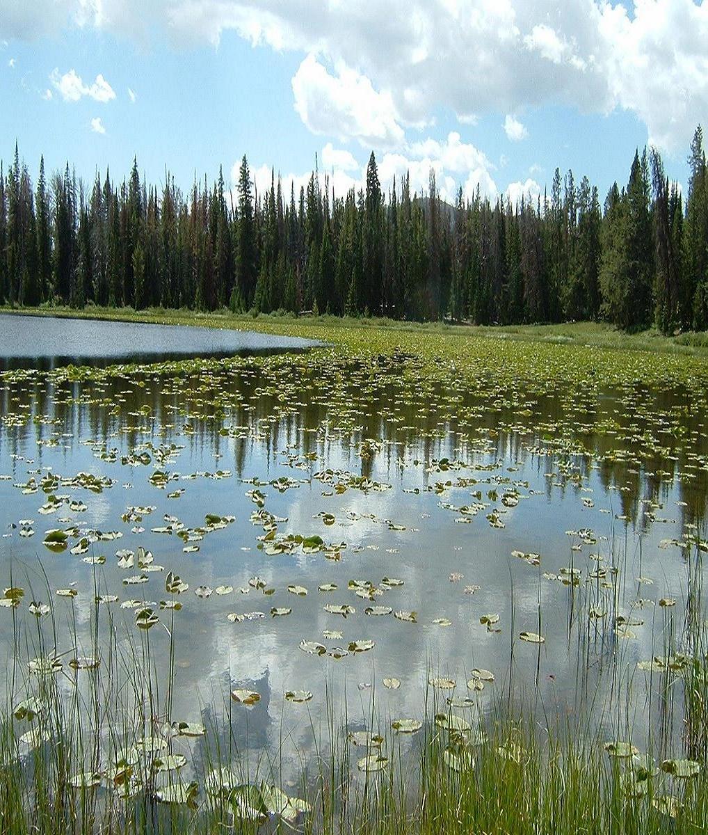 Frog Lake Loop- Mtbr com