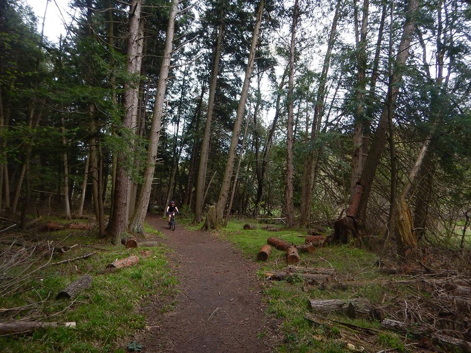Local Trail Rides-60623656_2380126818898422_6011574073904070656_n.jpg