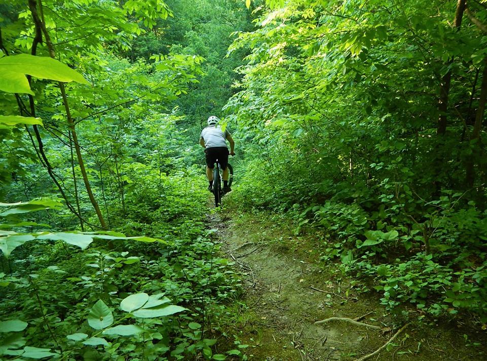 Local Trail Rides-65320863_2406023726308731_5011913538042593280_n.jpg