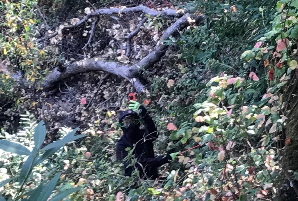 Phone fell into a garden of poison oak...-7-img_0159.jpg