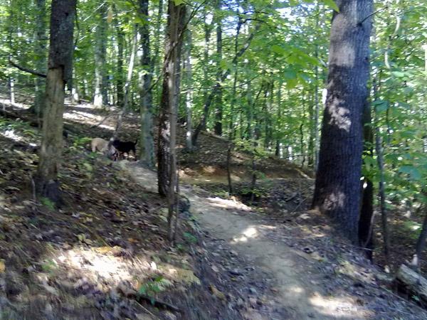 Dad + 4 year old + 2 dogs + Warrior Creek = Fun-7.jpg