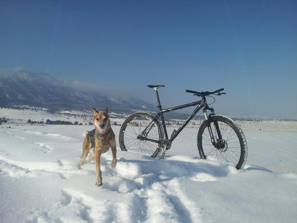 Post your dog with your single speed-734808_10101236825872933_365138938_n.jpg