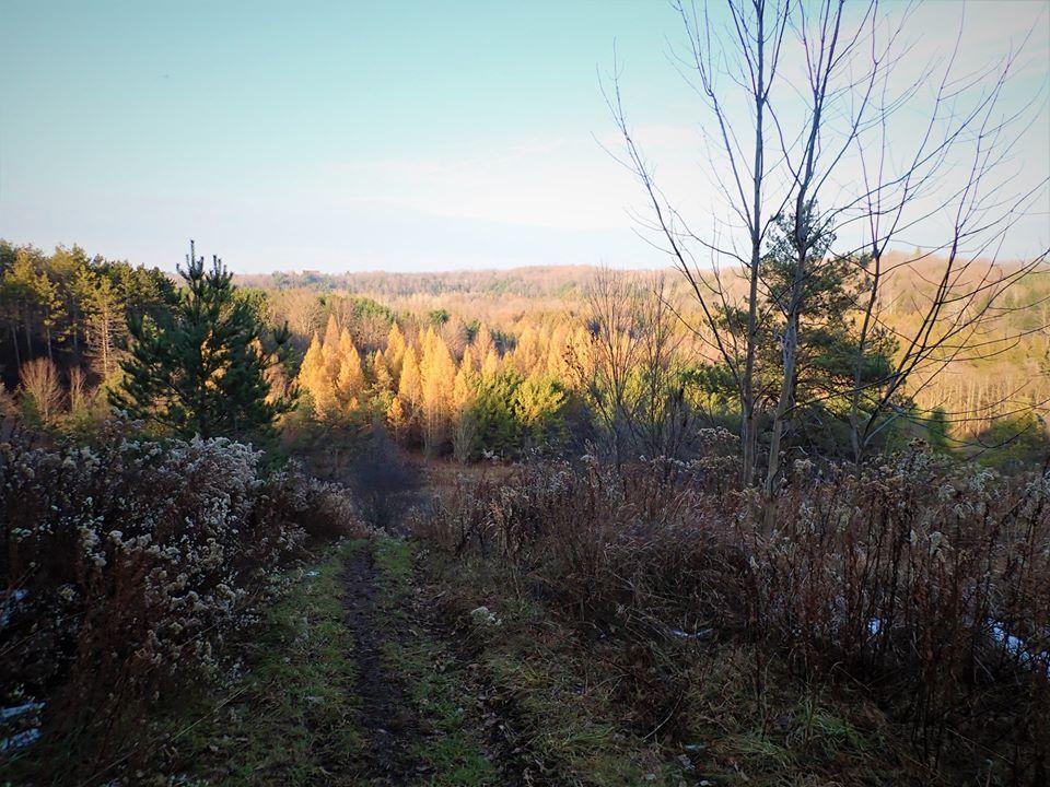 Local Trail Rides-75614110_2537015723209530_1014117687837589504_o.jpg