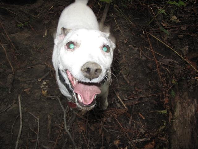 Dog Videos!-75de7253.jpg
