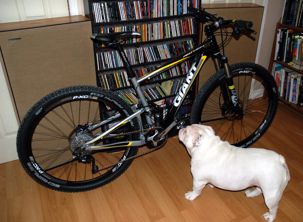 2013 Toronto Spring Bicycle Show. Are you going?-777310d1362372939-2013-anthem-x-29er-anybody-lily-inspects-new-bicycle-sniff-sniff.jpg