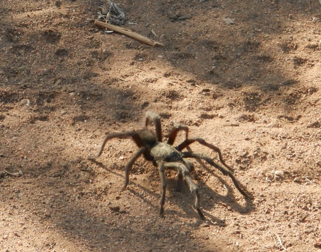 Wildlife you have seen on trail...post your pics...-8.jpg