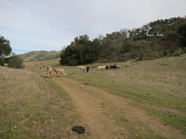 Joseph D Grant Ranch 2/2/13 9am-8438475203_fdb9fafd72_z.jpg