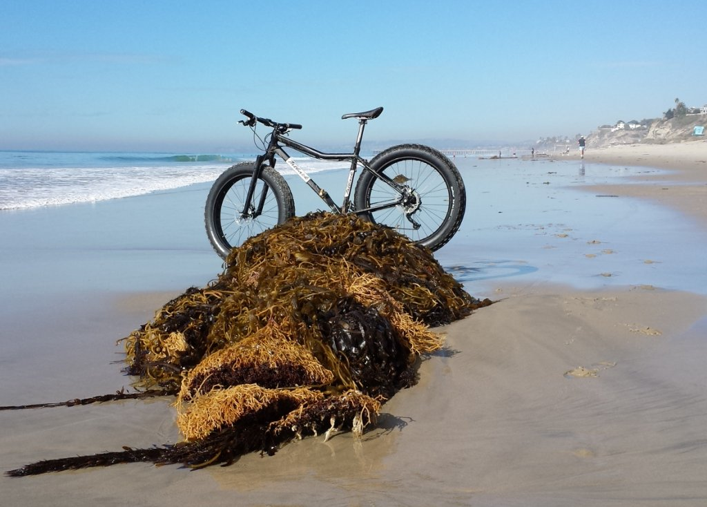 Beach/Sand riding picture thread.-851170d1385858596-daily-fatbike-pic-thread-pic2.jpg