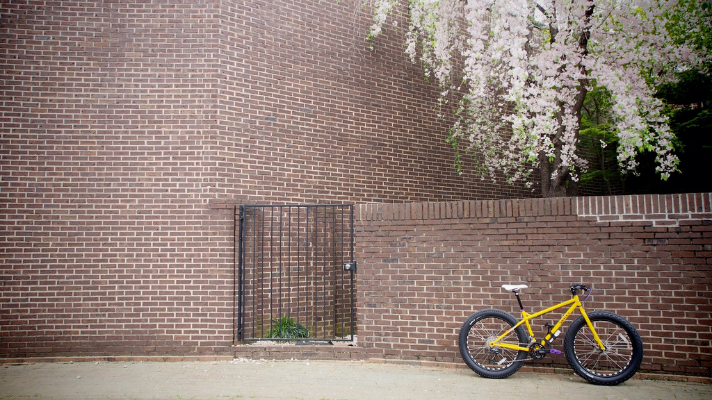 The Fat of Suburbia........AKA Urban Fatbiking.-8676881884_5af20b66d2_b.jpg