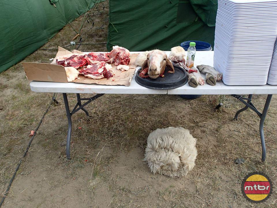 Sheep Dinner