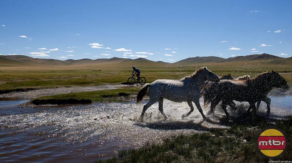 Stage 4 Wild Horses