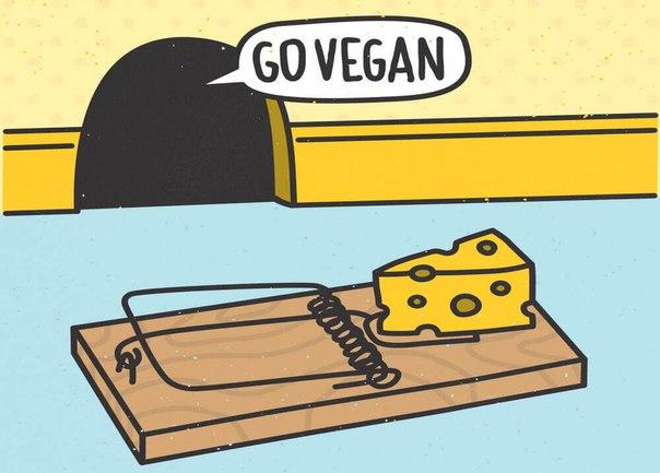 Vegetarian and Vegan Passion-9z1i_arxxo4.jpg