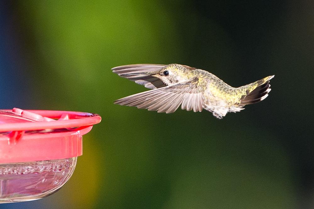 OT: Bird Pix...-_dsc3946.jpg