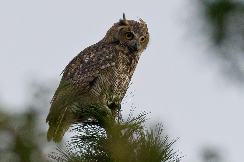 OT: Bird Pix...-_dsc4013.jpg
