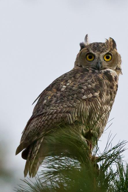 OT: Bird Pix...-_dsc4026.jpg