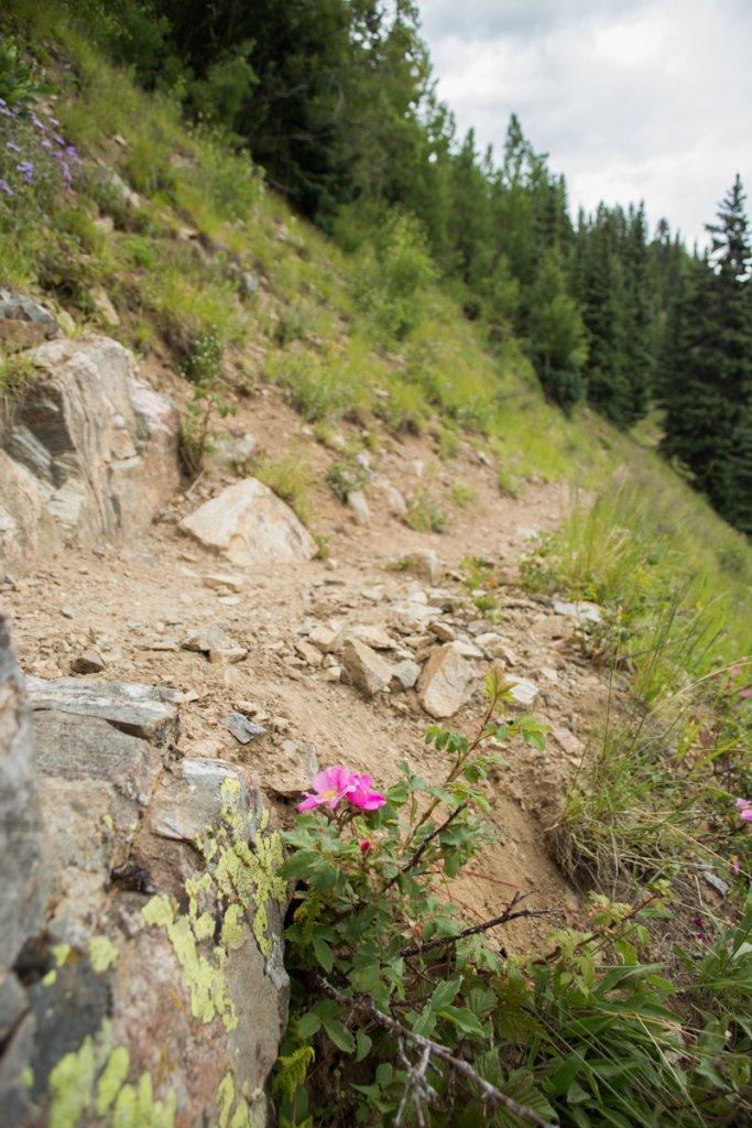 The NM Trail Pix Thread-_mg_4311.jpg