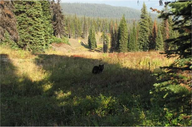Bear Sighted in Milton-a9f7f7d1.jpg