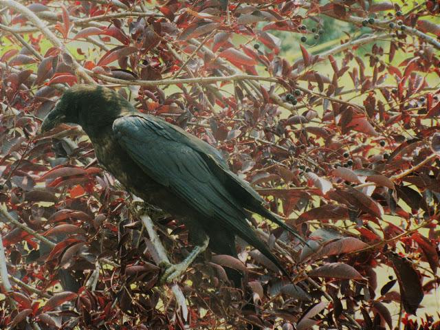 The Bird Thread...-aef3f195-69d6-416d-9e96-458cee7fcf14.jpeg