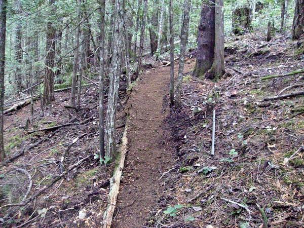 Niagara Region - Looking for trail tools.-after3.jpg