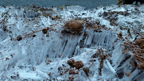 Name:  Alsea Frost.jpg