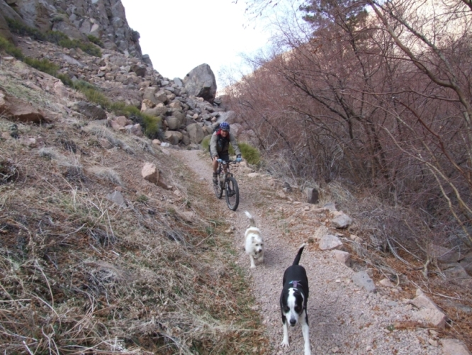 How to train a trail dog?-amelia-064.jpg