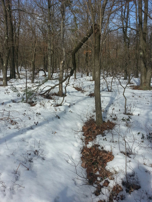 NEPA trails conditions 3/17/15-american-standard-3-25.jpg