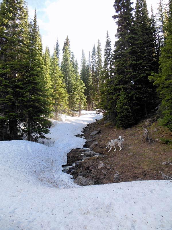 Trail Pics-amigasnow.jpg