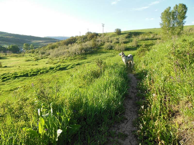 Trail Pics-amigatrail.jpg