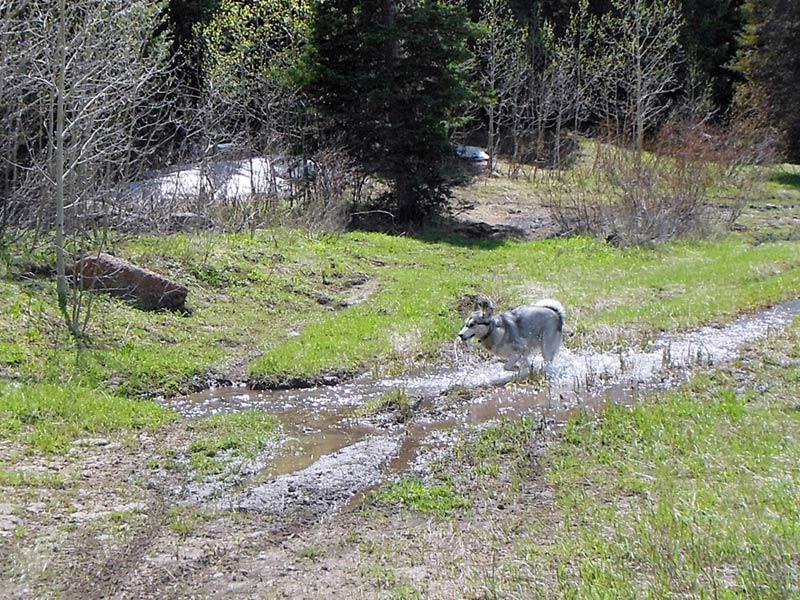 Trail Pics-amigawater.jpg