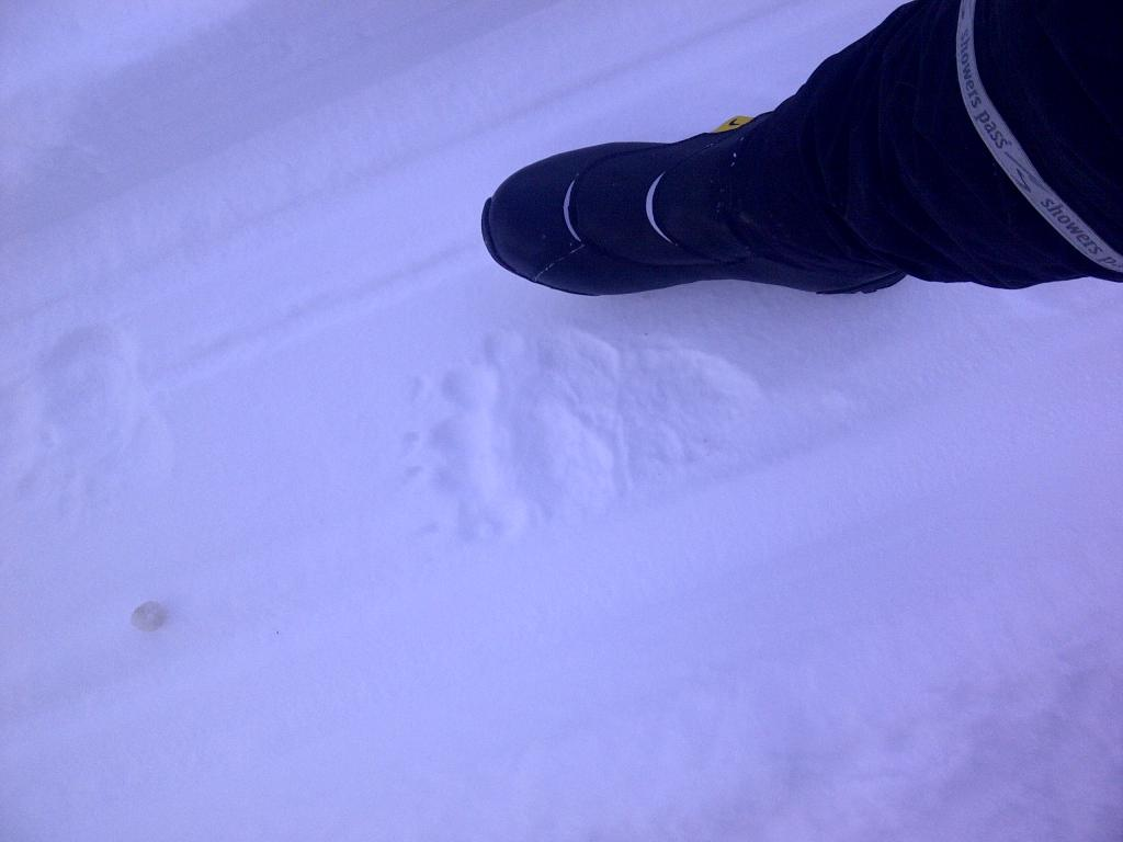 Critter tracks on snow rides.-anchorage-20111119-00130.jpg