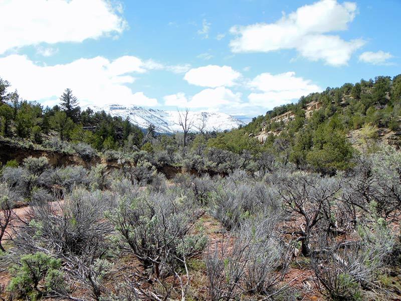 Trail Pics-antcrk10-b.jpg