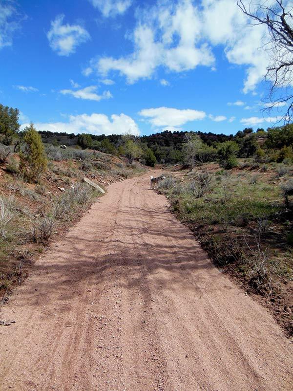 Trail Pics-antcrk5.jpg