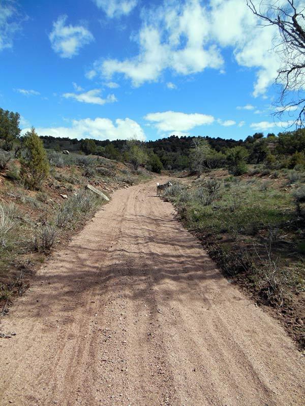 Trail Pics-antcrk6.jpg