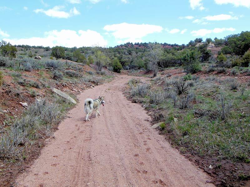 Trail Pics-antcrk7-b.jpg