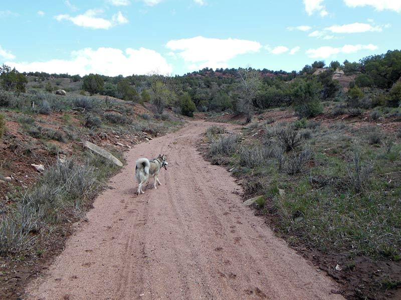 Trail Pics-antcrk7.jpg