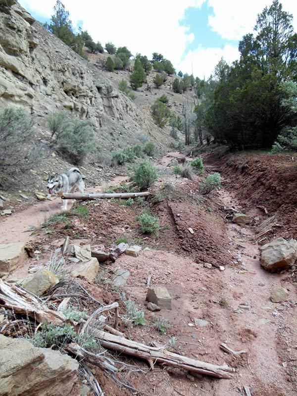 Trail Pics-antcrk8-b.jpg