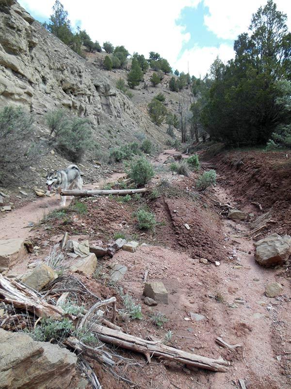 Trail Pics-antcrk8.jpg