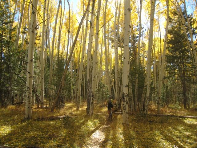 Flagstaff - Fall Color Ride questions-aspen1.jpg