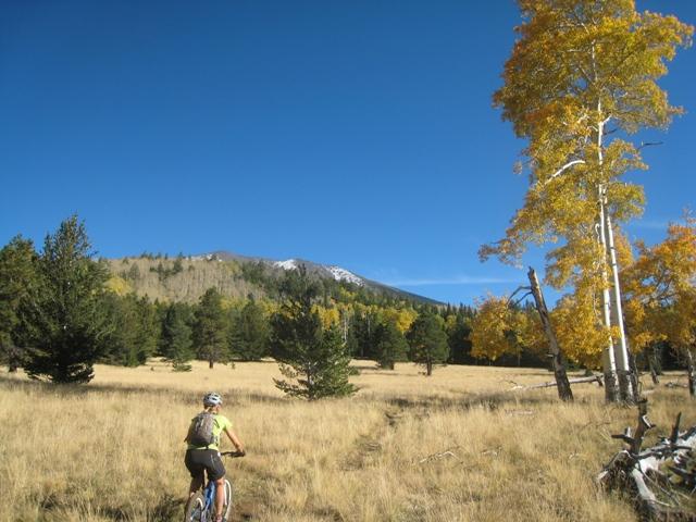 Flagstaff - Fall Color Ride questions-aspen2.jpg