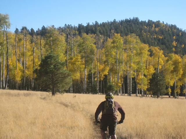 Flagstaff - Fall Color Ride questions-aspen3.jpg
