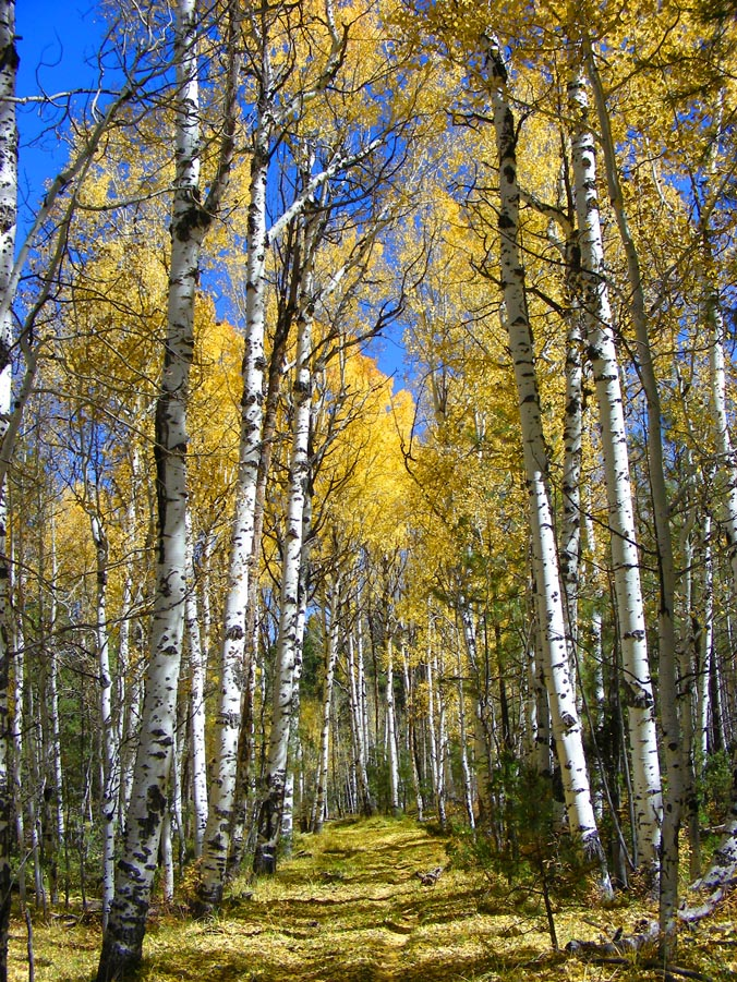 Post a picture or two of your neck of the woods-aspencorridor2011b.jpg