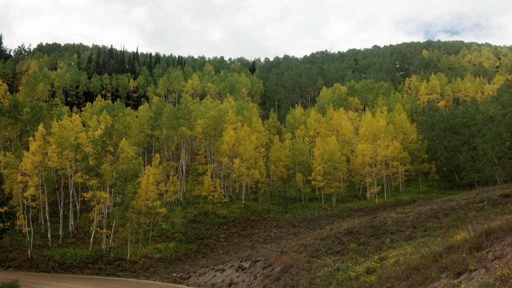 Fall pictures-aspenincb.jpg