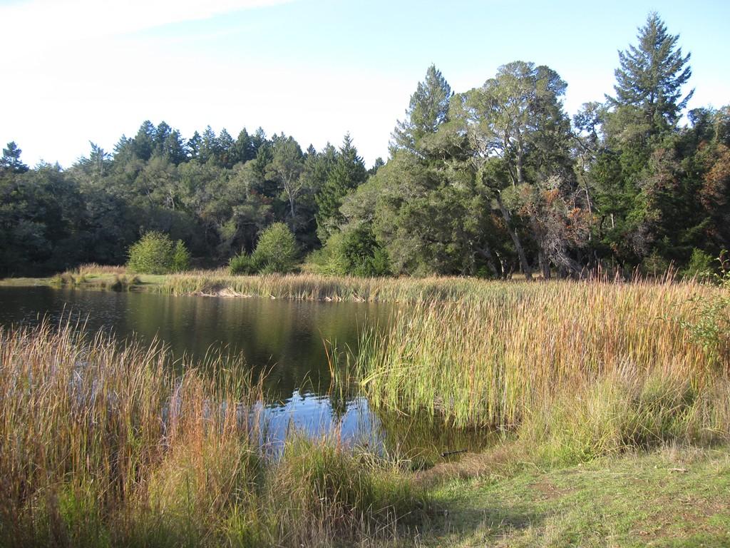 Assignment: Norcal Fall Photos-autumn2.jpg