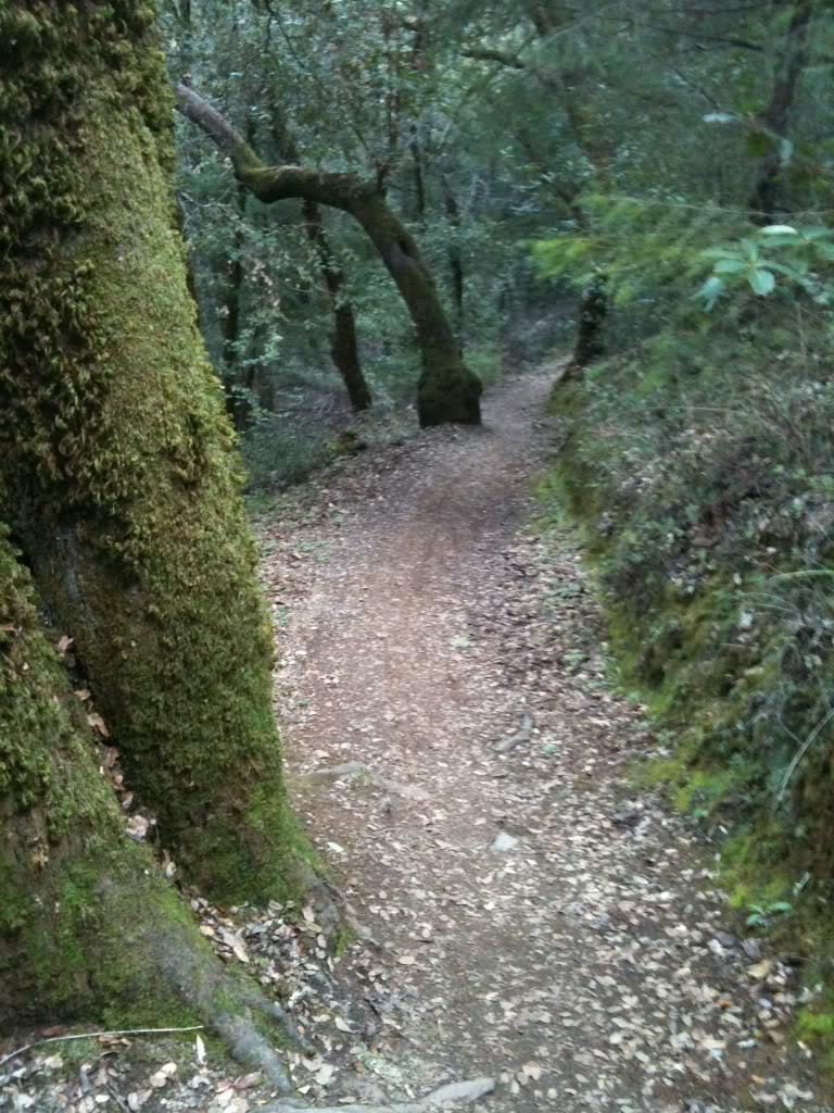 Trail Pics-b4429428.jpg